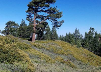 San Bernardino Peak 5