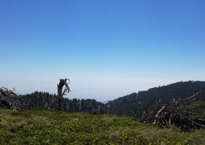 San Bernardino Peak 8